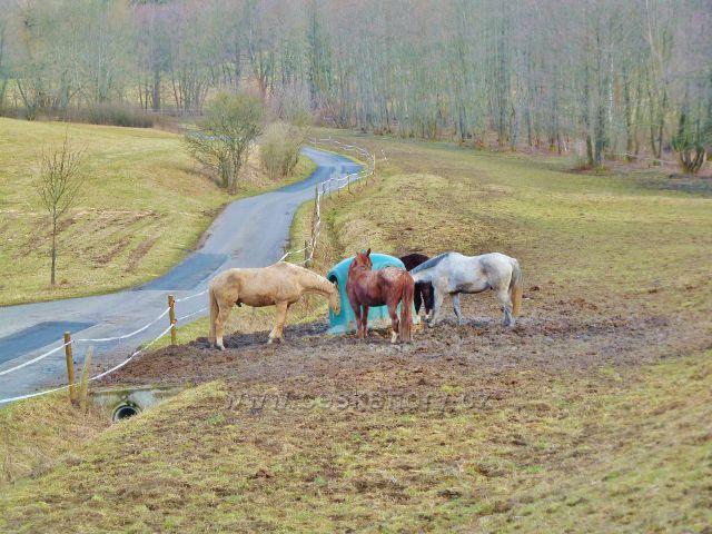 Kunvald - výběh koní nad údolím Rokytenky