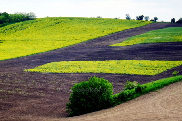 jaro v Moravském Toskánsku