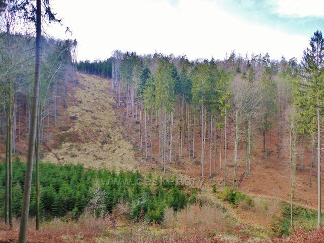 Potštejn - úbočí vrchu Roviny