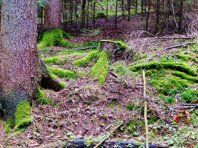 Proruby - svěží zeleň mechu u cesty do Potštejna
