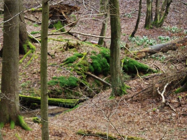 Vadětín - potok v údolí Sejfů
