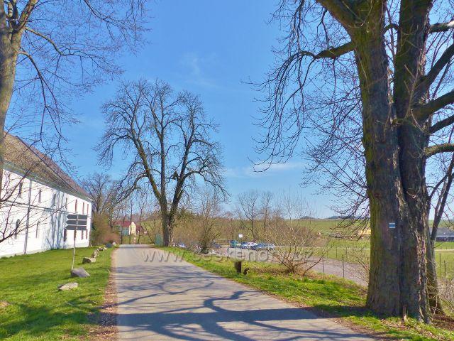 Helvíkovice - zbytek staré aleje u Poplužního dvora