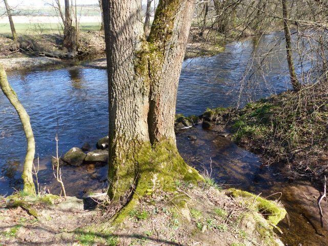 Helvíkovice - vyústění Horeckého potoka do Divoké Orlice
