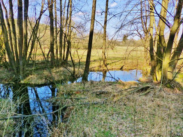 Bohousová - jezírko v Přírodním parku Orlice