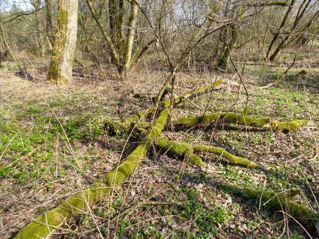 Přírodní park Orlice u Dolního dvoru