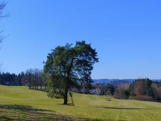 Helvíkovice - borovice s posedem u Pustin
