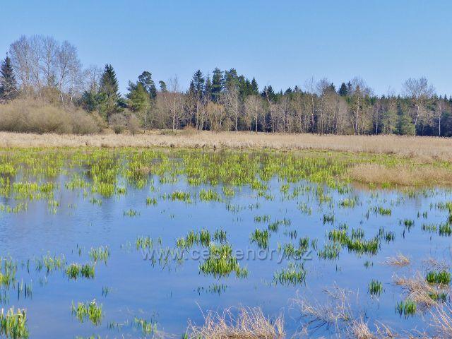 Zarůstající hladina Helvíkovického rybníku