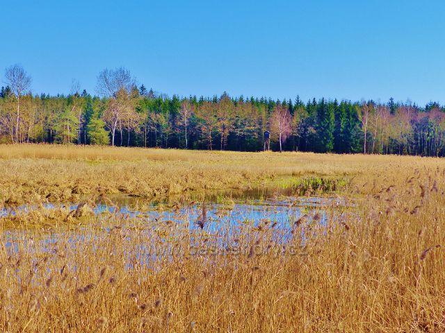 """Helvíkovický rybník - """"tam za vodou v rákosí"""" .. je posed"""
