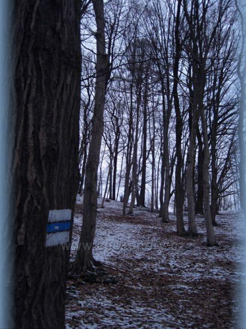 pocukrovaný les