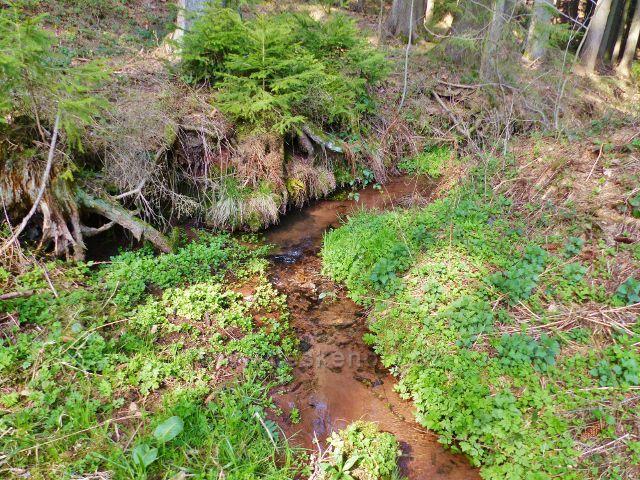 Dlouhoňovice - Horecký potok pod Žampašskou studánkou