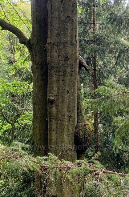 Strom v lese