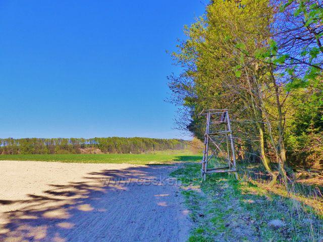 Žamberk - posed na okraji lesa V Dolech nad Kunvaldem
