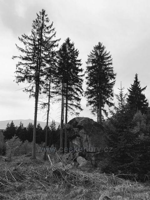 Skala a stromy