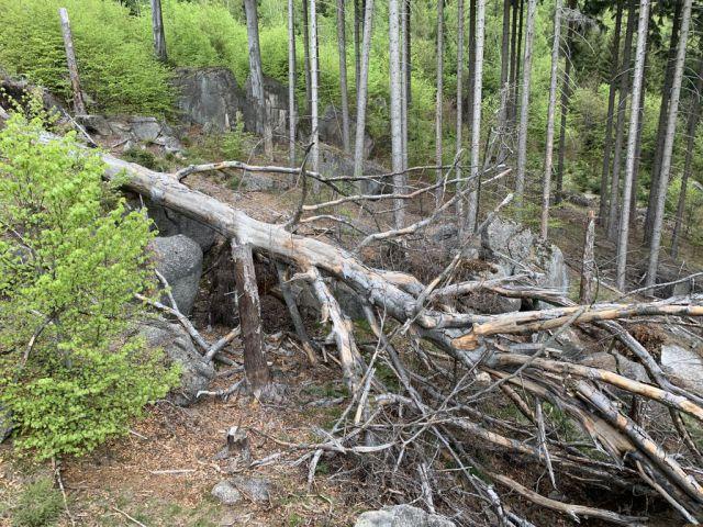 Strom po větru