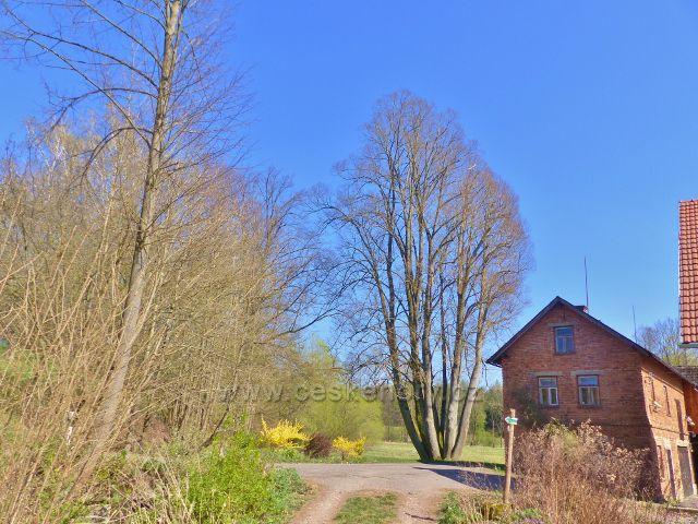 Žamberk - odbočka cesty k Dymlovskému rybníku z cesty do Kněžství u Cabalkova statku