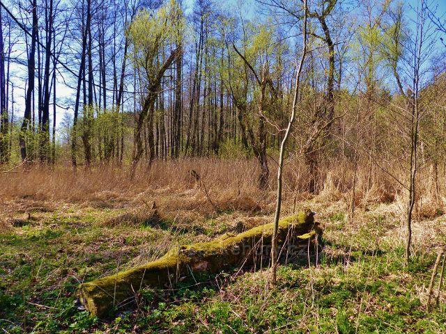 Žamberk - záplavová část Dymlovského rybníku