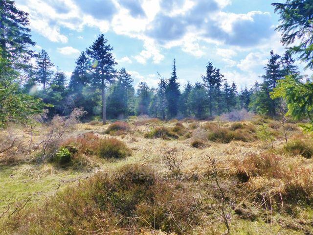 Šerlich - vyschlé rašeliniště v PR Jelení lázeň