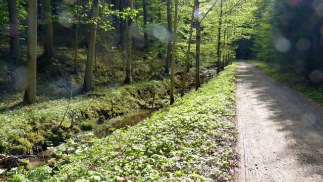 Skuhrovský potok