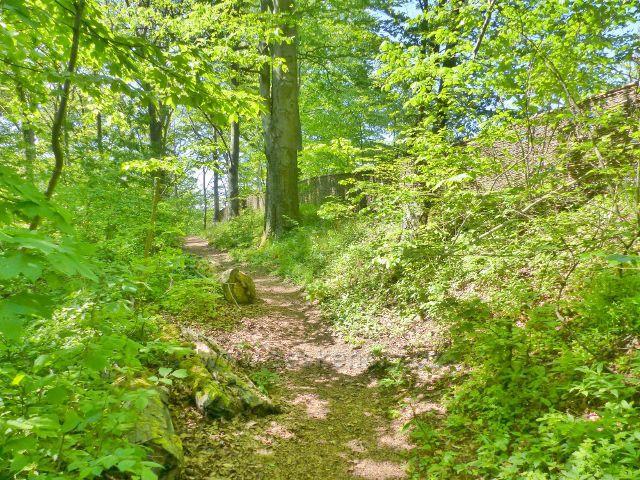 Areál zříceniny hradu Žampach