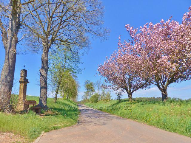 Cesta po zelené TZ z Písečné do Žamberka