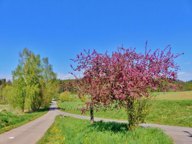 Cesta z Písečné do Žamberka nad Kalouskovým rybníkem
