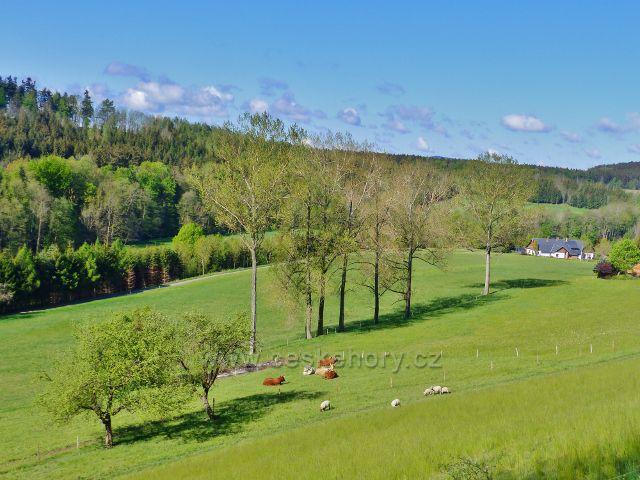 Kunvald - pastva na úbočí Krejsovo kopce