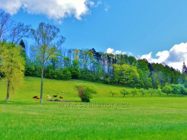 Kunvald - pastvina na úbočí Krejsovo kopce