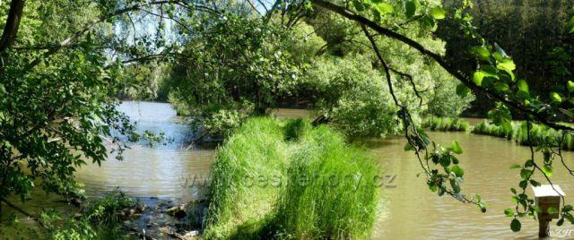 Slunečný rybník