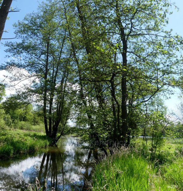 Ostrovský potok