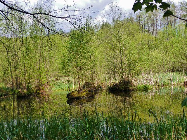 Dymlovský rybník