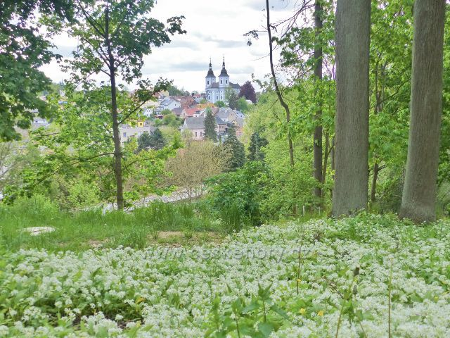 Žamberk - průhled z parku Albertinum ke kostelu sv. Václava