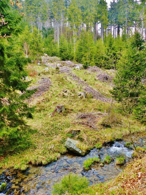 Paseka po těžbě dřeva na pravém břehu Kunčického potoku