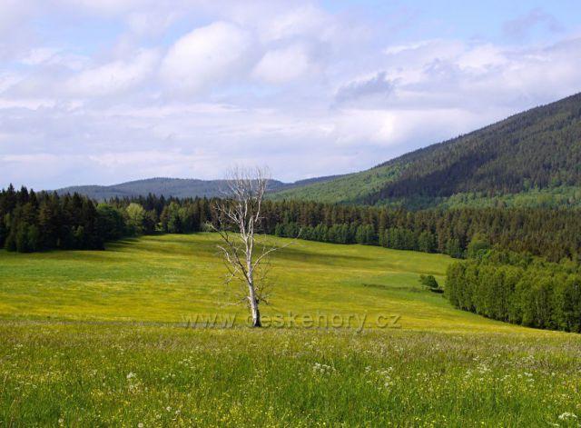 Sušina u Křemelné(v seriálu Modrava ještě zelený strom)