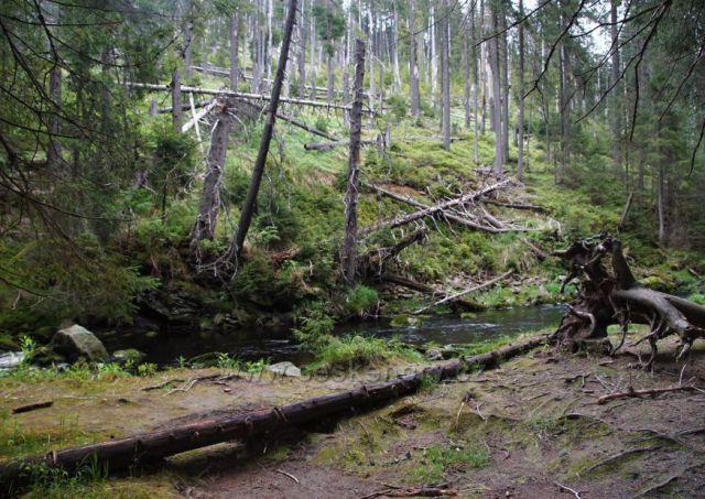 Kouzelná šumavská zahrada. Modravský potok