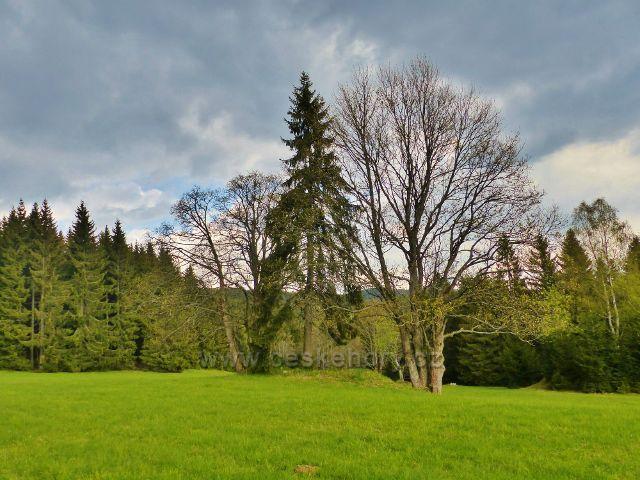 Vzrostlé stromy na bývalém gruntu ukazují na bývalé osídlení krajiny