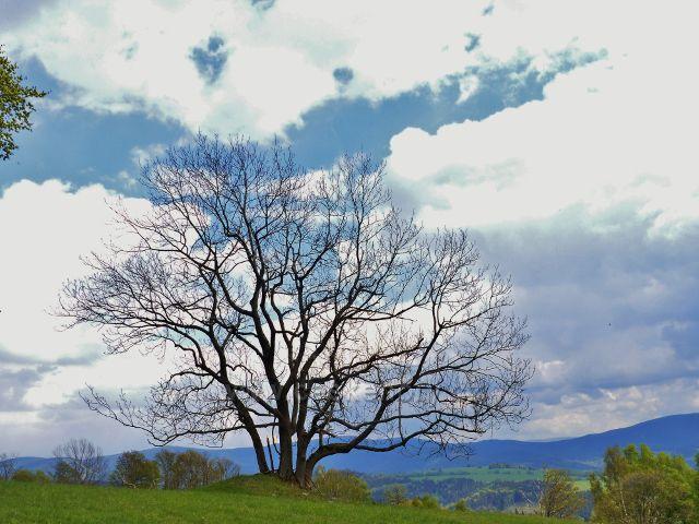 Silueta stromu na úbočí Větrova
