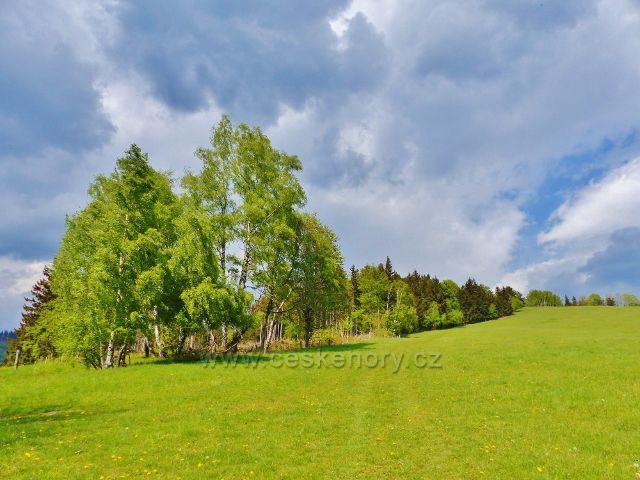 Zpětný pohled na travnatou cestu po zelené TZ ze Starého kopce, která jde podle okraje lesa