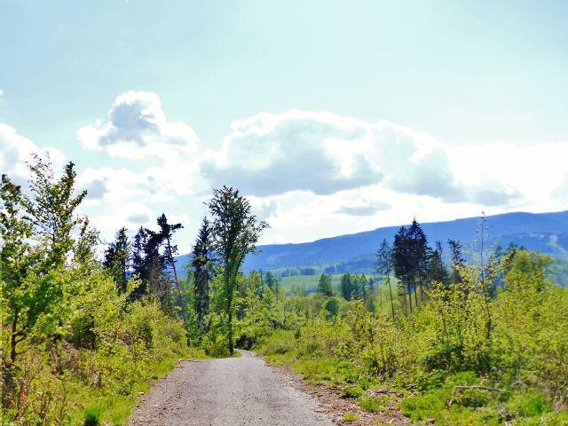 Poslední úsek cesty po zelené TZ na úpatí Starého kopce