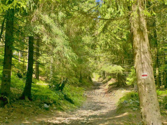 """Petříkov - cesta po červené TZ od rozcestí """"Pod Císařskou boudou"""" se postupně mění v úzkou lesní úvozovou cestu se značným stoupáním"""