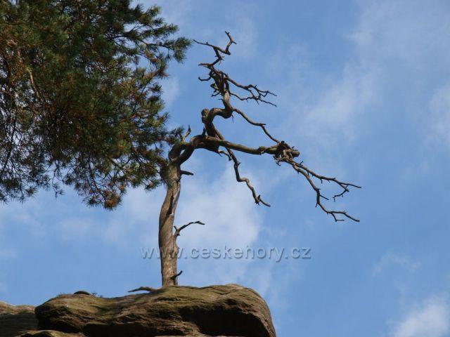 Adršpach kmen na vrcholu
