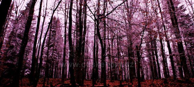Les u Borové Lady
