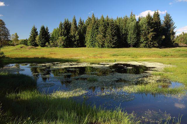 Velký Radní rybník