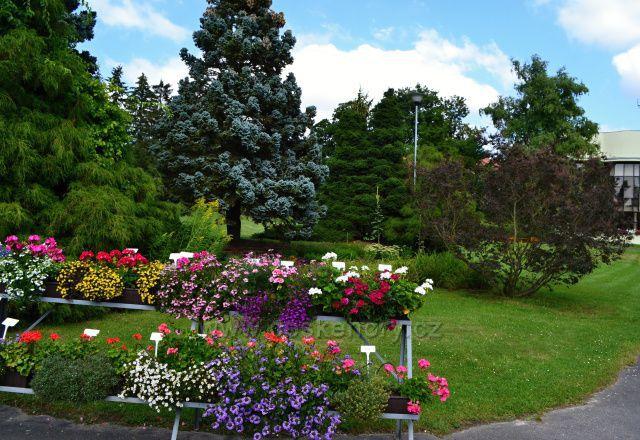 Arboretum Nový Dvůr alpinky
