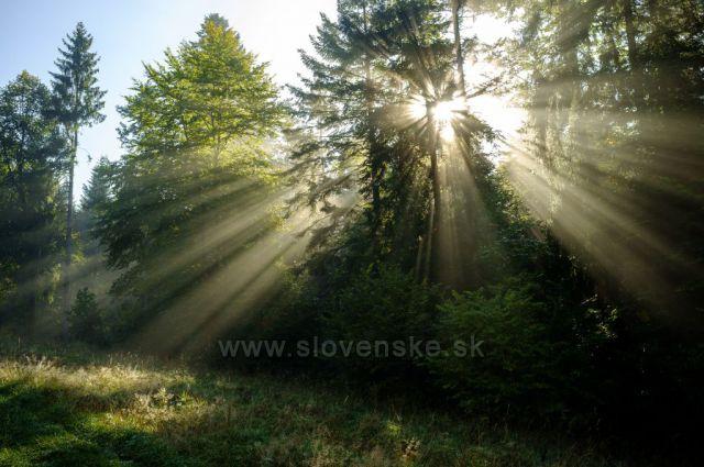 Nad obcí Dedinky - stíny v ranní mlze