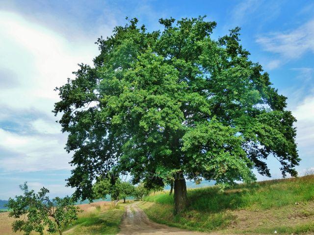 Bludov - cesta po zelené TZ od rozcestí Na Příčné k Bludovečku