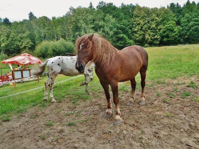 Bludov - koňský výběh u restaurace Bludoveček
