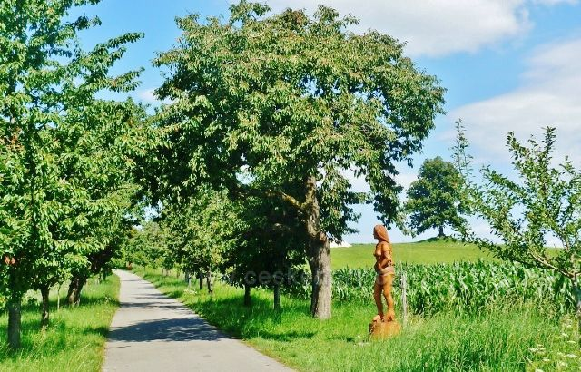"Skuhrov nad Bělou - socha ""Léto"" v aleji u silničky k památné lípě"