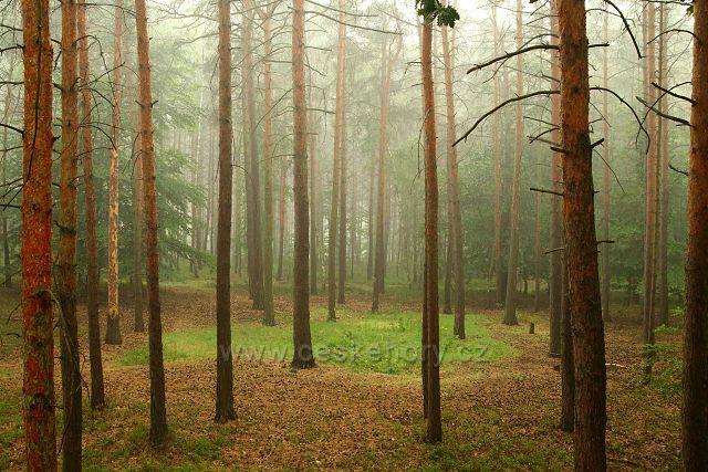 Les u Úštěka