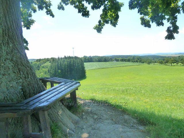 Skuhrov nad Bělou - pohled od památné lípy k aleji vedoucí  od kostela na Hruštický kopecc