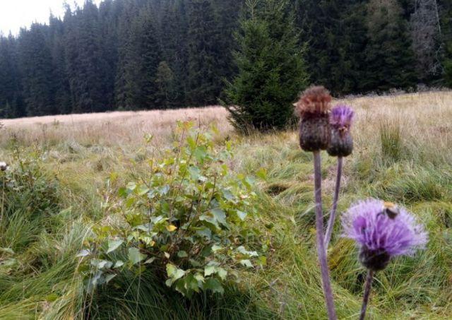 Hluboké lesy a bohatá šumavská flora